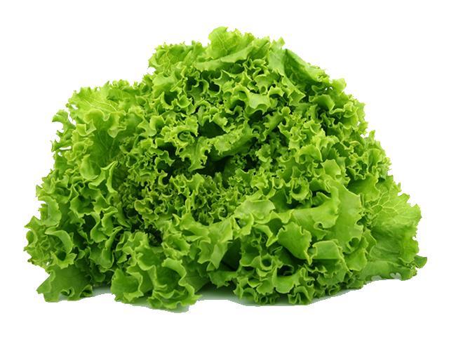 zelena salata velika web